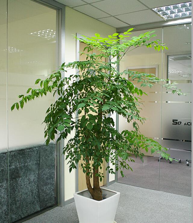 单杆幸福树